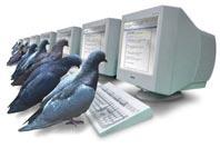 Computer-pidgeons
